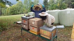 prohlídka včelstev vterénu